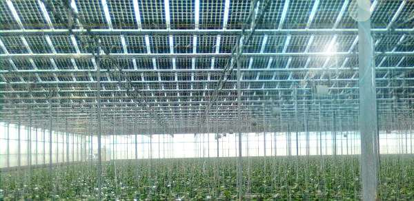Serra fotovoltaica con moduli vetro vetro