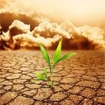 Cambimento climatico: la minaccia delle centrali a carbone